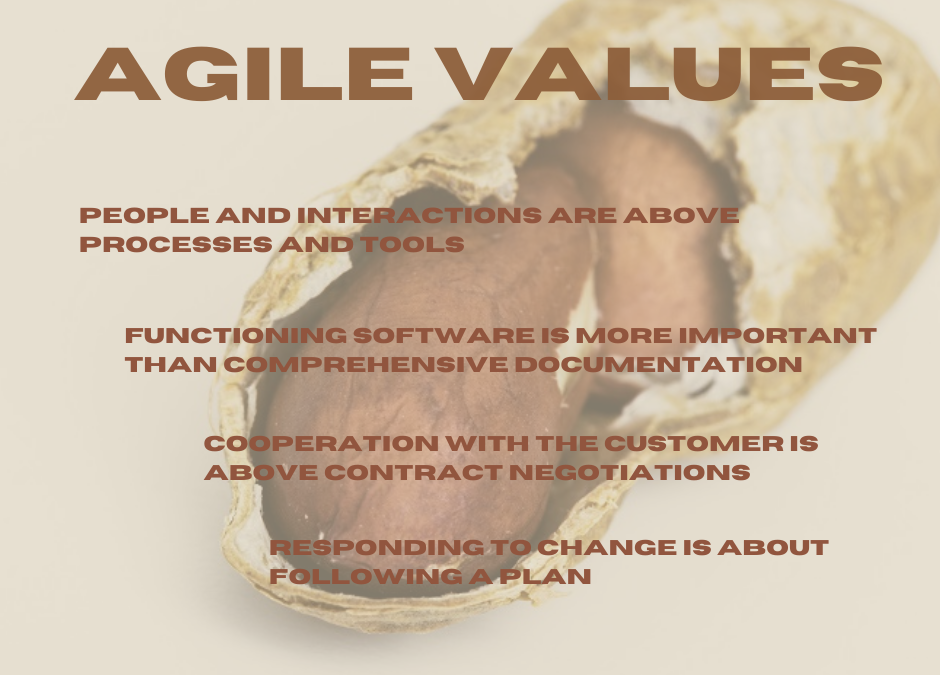 Agility in the Nutshell – Agile Values