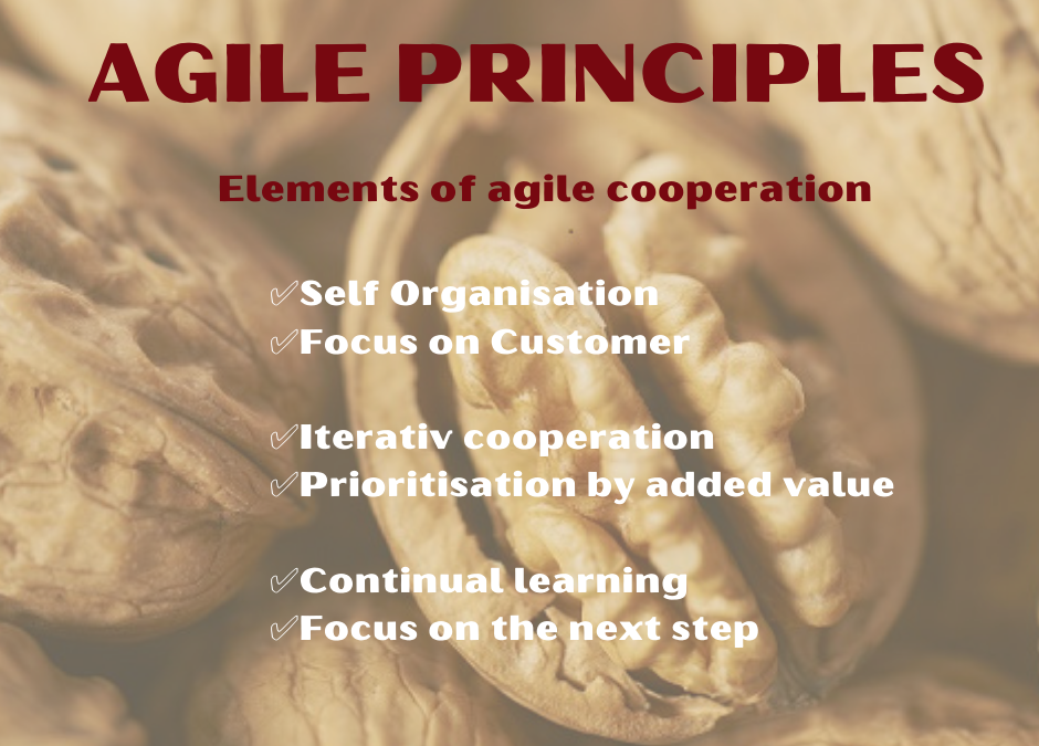 Agility in the Nutshell – agile principles